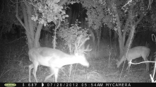 Trail camera at the pear trees.