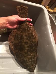 inshore fishing, flounder